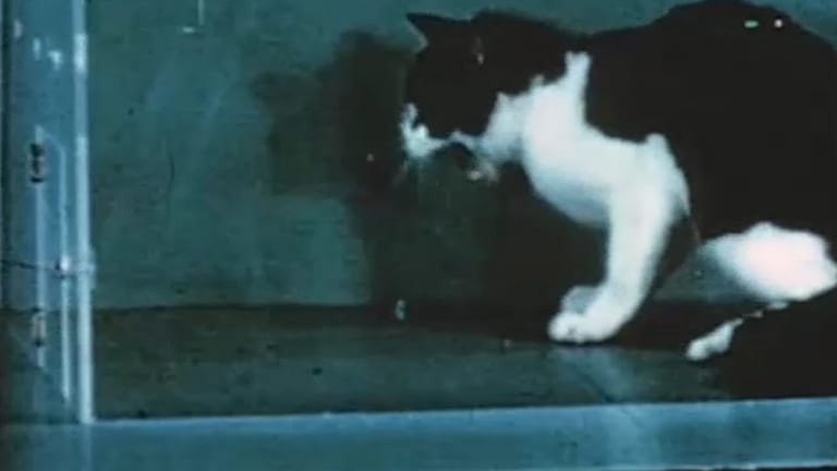Watch the US Army Give This Cat a Bad Trip